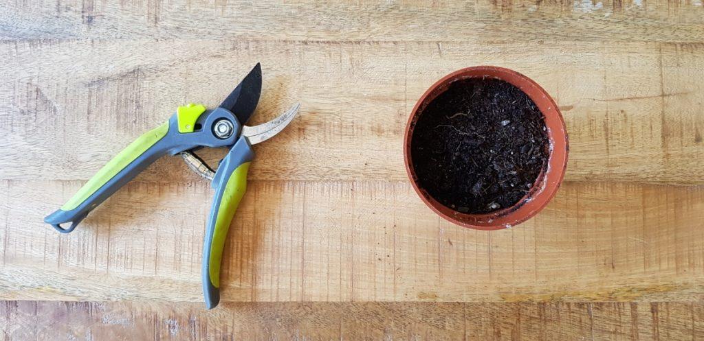citroenplant stekken stap 1