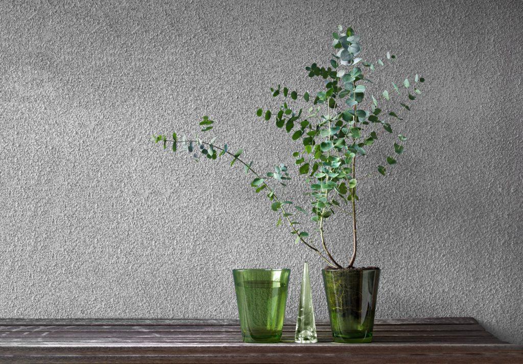 eucalyptus binnen